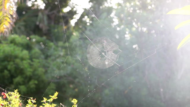 Cobweb & Trees in the Sun. Backlit detail nature shot