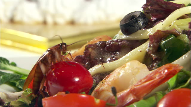 Cockroach crawling on a Dwarf Cherry Tomato in pasta