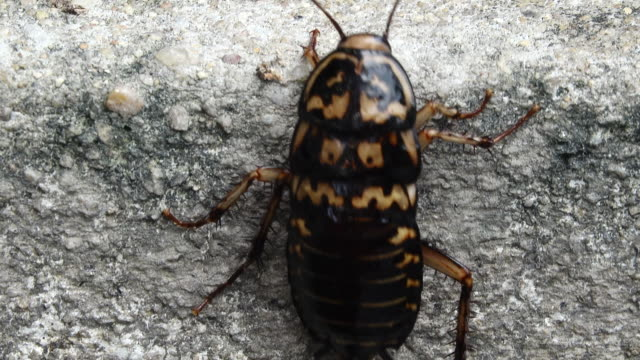 Cockroach crawling on the wall