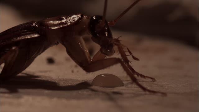 Cockroach vomiting poisonous exterminator