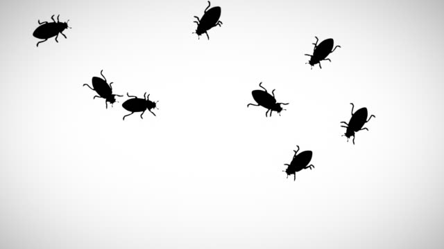 Cockroaches running Käfer Blatt Hintergrund