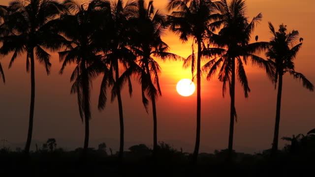 Cocos palm tree en zonsondergang