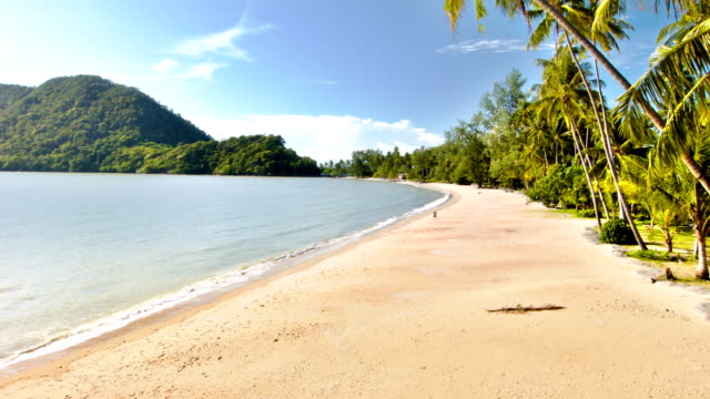 coconut palm trees at a tropical beach