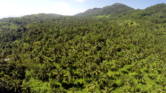 Coconut plantations aerial view from a drone