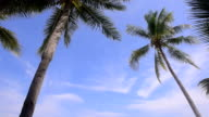 coconut tree and sky