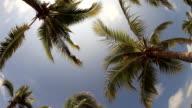Kokosnuss Baum mit blauer Himmel im fish eye view