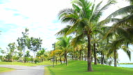 Coconut trees were planted on grass in the park.