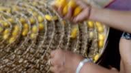 Cocoon silkworm
