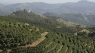 coffee plants are pictured at a plantation at Sao Geraldo farm near Serra Negra Brazil Wideshots of the montain ranges surrounding a coffee...