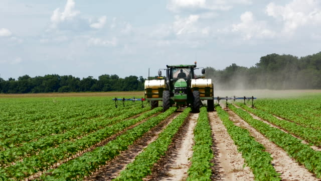 Colfax Louisana cotton fields rows of cotton farming with tractor spraying insecticides for growth