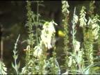 Colibri 2 - NTSC