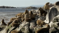Colony of sea lions at the Beagle Channel