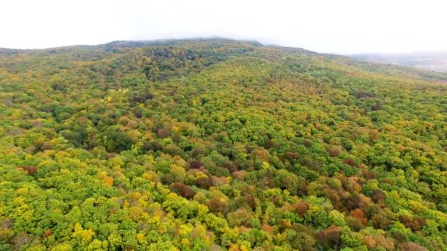 Antenne: Bunten Herbstwald auf sonnigen Tag