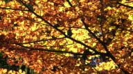 Bunte Herbst Baum im Sonnenlicht