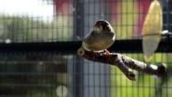 Uccello colorato in una gabbia