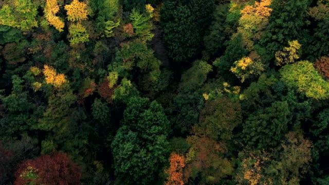 Colorful Fall