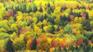 colorful foliage in Maine