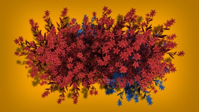 Colorful Growing Flowers HD