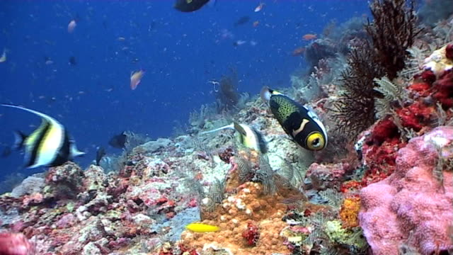 Colorful reef scene teeming with life 2