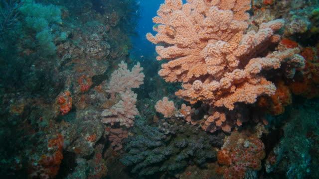Kleurrijke zee fan koraal op onderzeese pinnacle