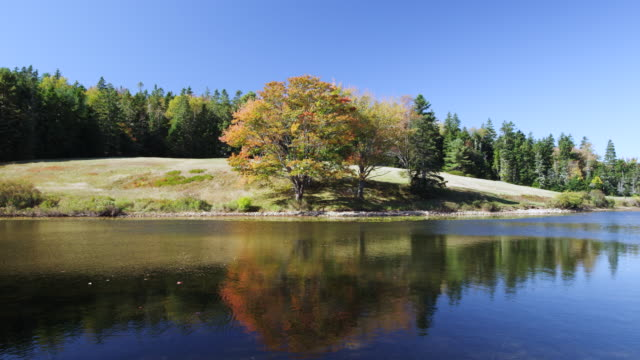 Colorful tree on shore of lake with fll folaige in Maine