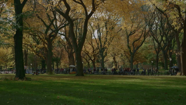 Colorful trees people walking in Central Park NYC