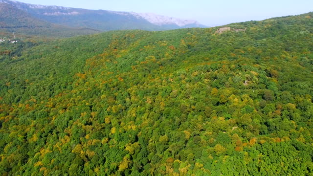 AERIAL: colorful woodlands in autumn, aerial video