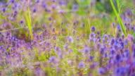 Färgstarka blommande fält