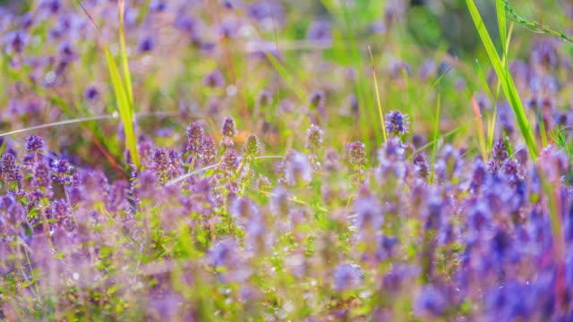 Colourfull flowering field