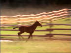 PAN colt running to join running mother in fenced-in grassy field