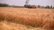 Mähdrescher bei der Weizen Ernte