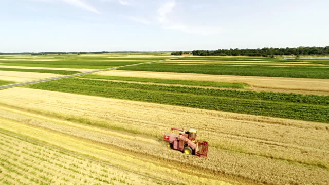 AERIAL Combine Harvester Harvesting The Wheat