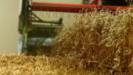 Combine Harvester Harvesting Wheat Field (4K/UHD to HD)