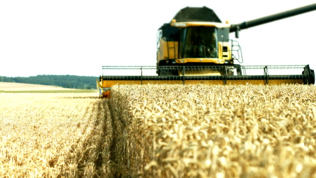 Combine Harvester Harvesting Wheat Field (4K/UHD to HD)