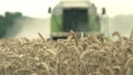 Combine harvester harvesting wheat in field