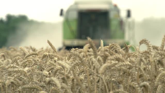 Combine harvester harvesting wheat in field