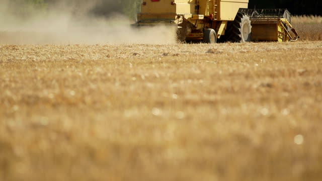 Combine harvester moving on wheat field