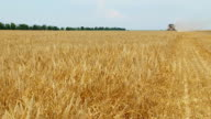 Mähdrescher in wheat field