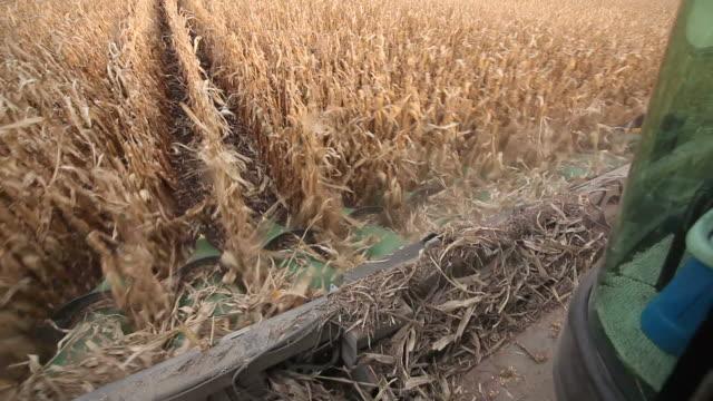 Combine Harvesting Fall Corn