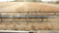 Combine Harvesting Fall Soybean Field
