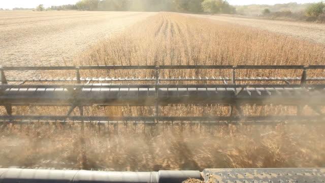 Combine Harvesting Fall Soybean Field