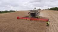 Combine Harvesting Rapeseed, Aerial View