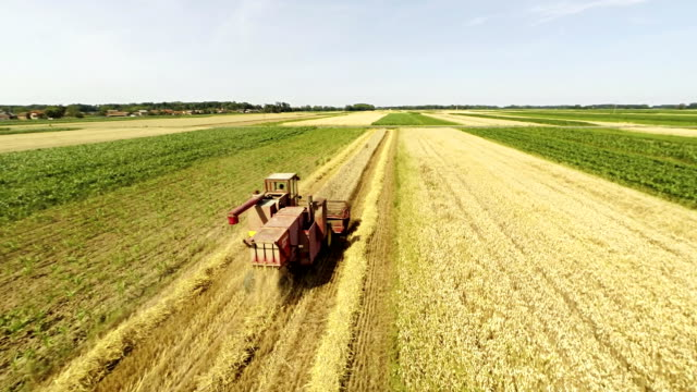 AERIAL Combine Harvesting The Wheat