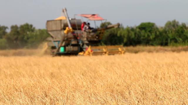 Combine tractor harvests