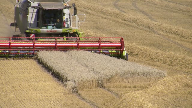 MS Combining cornfield through harvester at cornfield / Perl, Saarland, Germany
