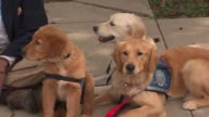Comfort Dogs Go To Oklahoma on May 22 2013 in Chicago Illinois