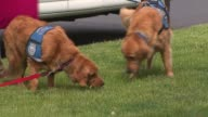 WGN Comfort Dogs on May 22 2013 in Chicago Illinois