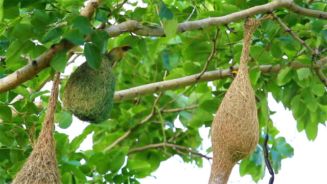 Community of Birds on Tree