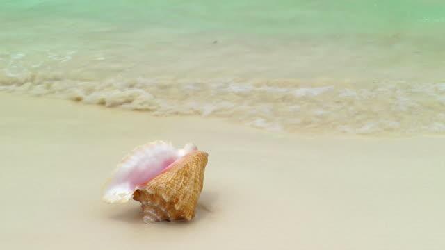 Conch Shell on Cancun Beach