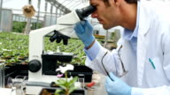 Confident botanist studies plant life in a nursery